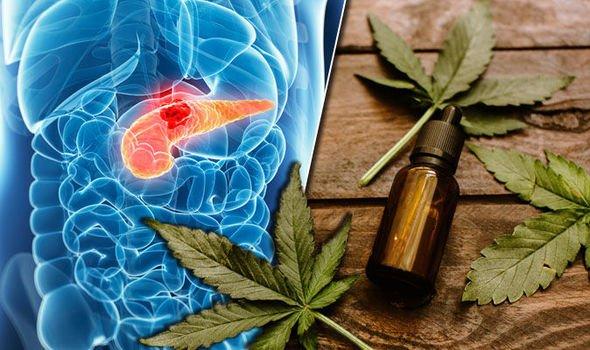 Photo of La marihuana puede ser la cura contra el cáncer de páncreas