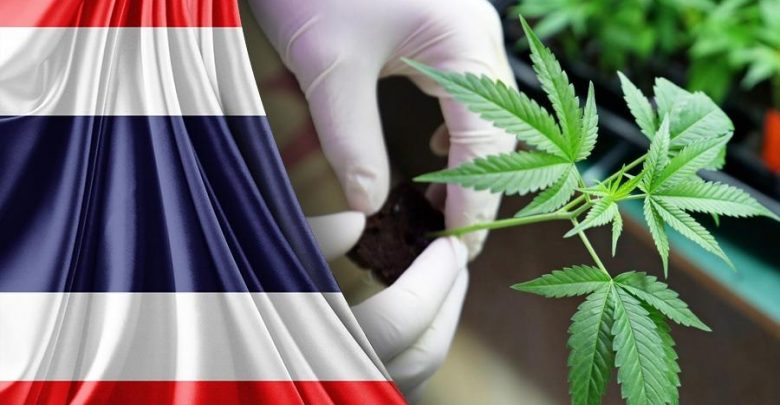 Photo of Tailandia quiere ser un destino líder en cannabis medicinal