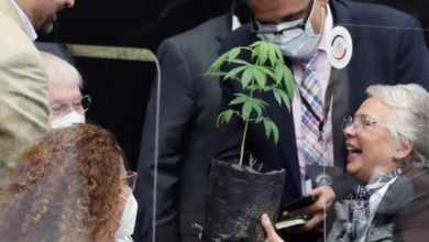 Photo of Regalan planta de cannabis a funcionaria del gobierno de México